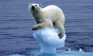 polar-bear-on-receding-ice