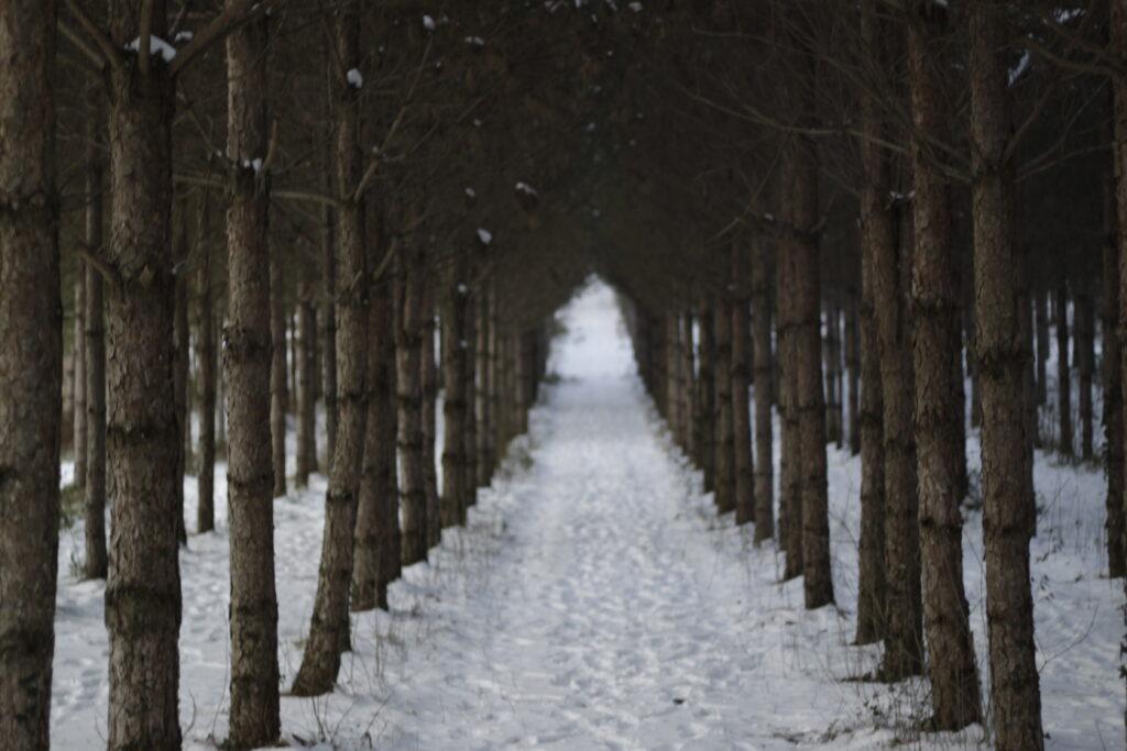 Son Ha pine forest path 1