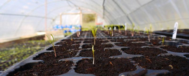 happy-farm-sprouts-hor