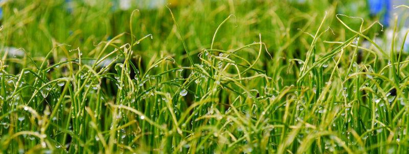 pvhappy-farm-green