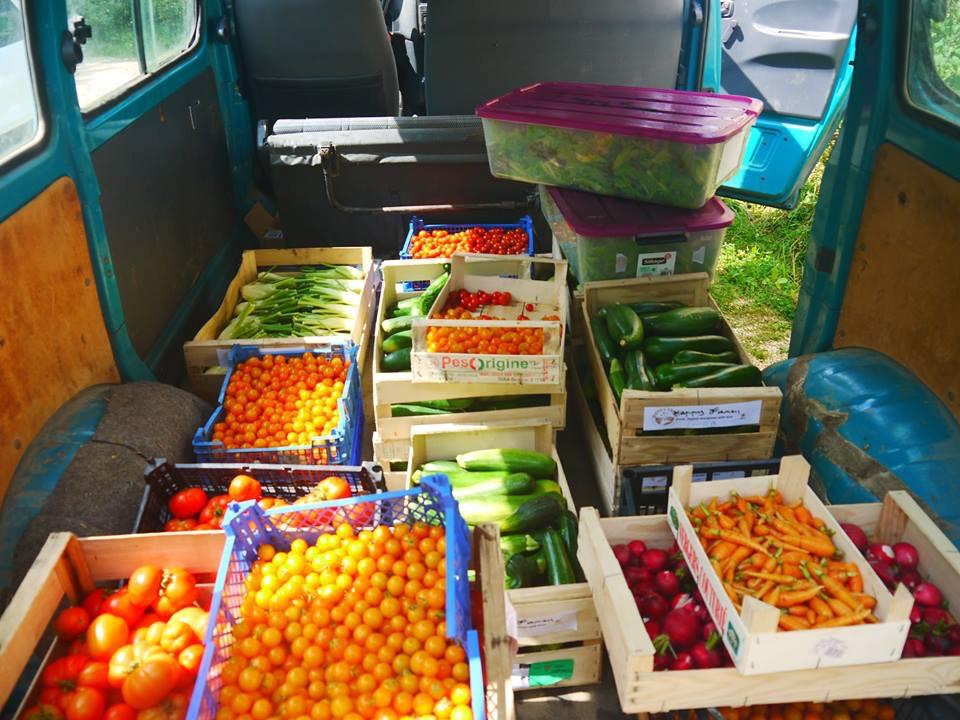 happy farm harvest (1)