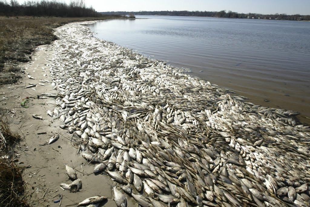 vietnam dead fish