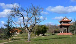 paysage du hameau du haut, au premier plan un arbre sans feuilles, sur la droite, la tour de la cloche...