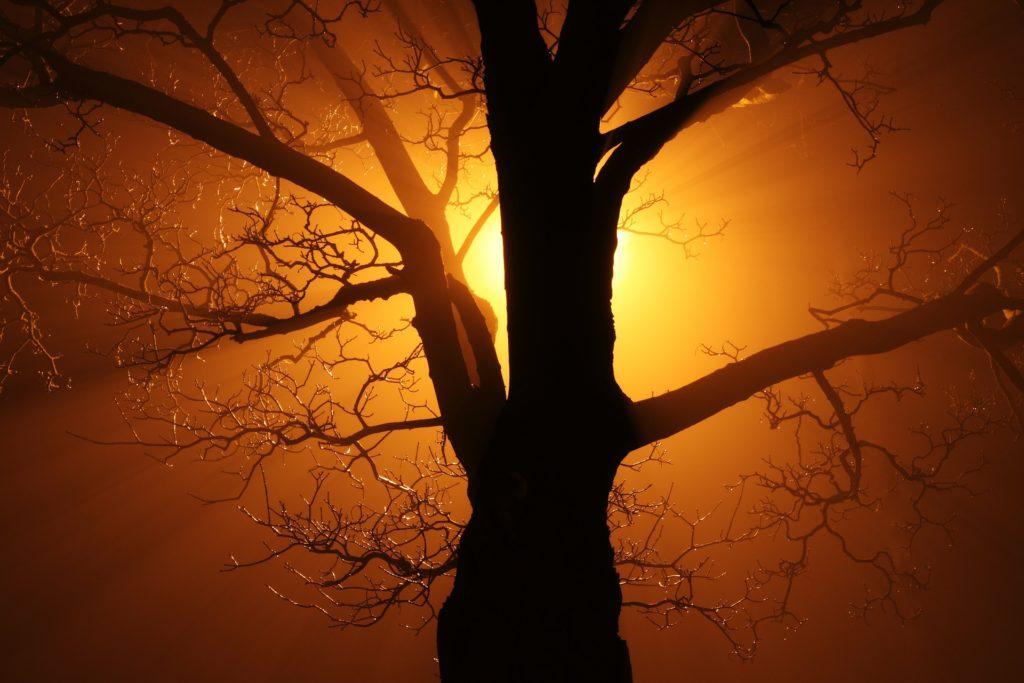 Arbre avec un coucher de soleil derrière